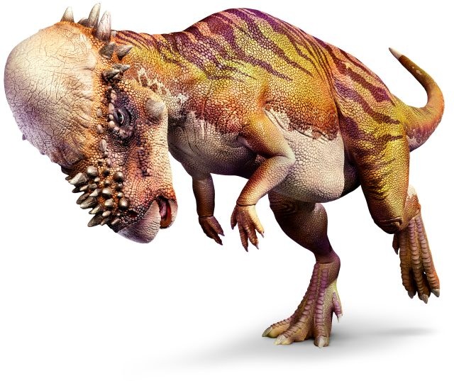 Pachycephalosaurus_right_mch8y6